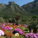 Cape Town: I giardini botanici di Kirstenbosch