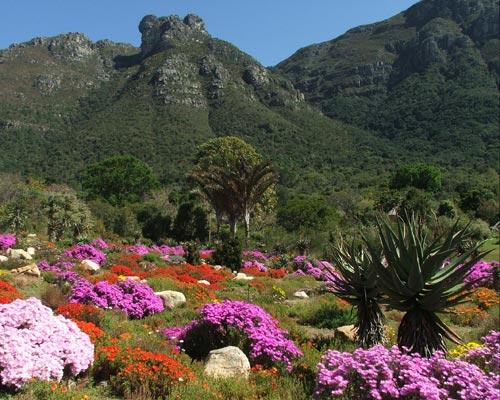 kirstenbosch national botanical gardens mattslandscape.com