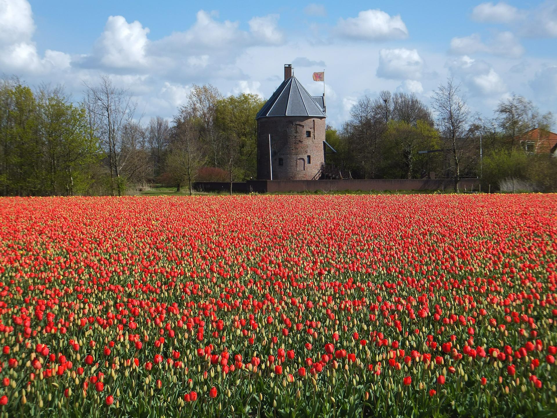 Olanda: per gli amanti dei tulipani e dei fiori