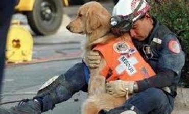 Volontariato: come aiutare i cani di strada in India