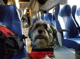 Come viaggiare con un cane