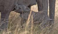 Safari in Africa per famiglie