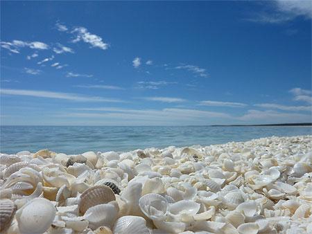 Shell beach: la spiaggia delle conchiglie