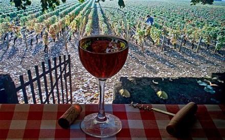 Tour dei vini in Provenza