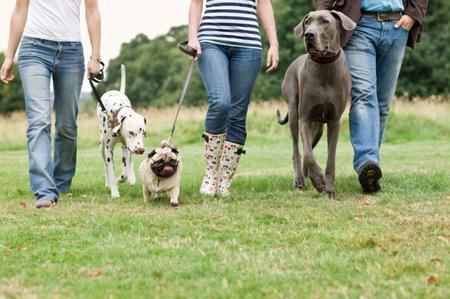 Quali sono pensioni per cani in Trentino
