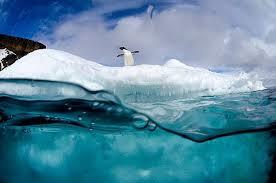 Cosa fare e vedere in Antartide