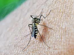 Come trattare i mosquitos quando si viaggia