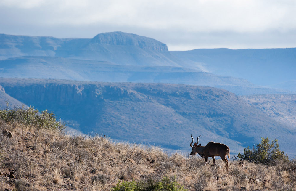 Come visitare parco naturale Karoo Sud Africa