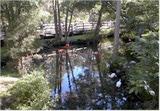 La Costa della Natura in Florida: le sorgenti di Weeki Wachee e di Homosassa