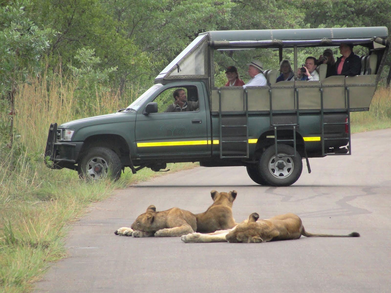 Come visitare Krueger Park in Sudafrica