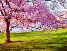 Italia in primavera