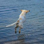 Quali sono le spiagge in Corsica per cani