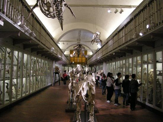 museo scheletri