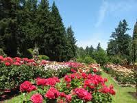 Come raggiungere Portland International Rose Test Garden