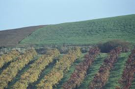 Tour dei vini in Spagna