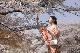 Come pianificare un viaggio al festival dei ciliegi giapponesi