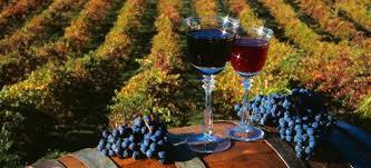 Itinerario enogastronomico del vino marchigiano