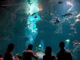 Il Museo Oceanografico di Monaco