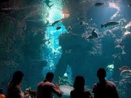 Orari e prezzi del Museo Oceanografico