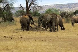 Quanto costa un safari di due giorn in Kenya?