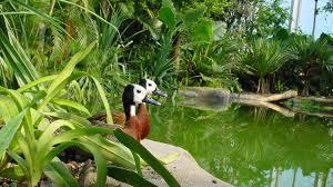 zoo di zurigo