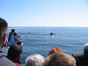 300px Whale Watching