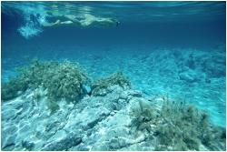 Dove fare immersioni a Rodi