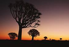 Come viaggiare sicuri in Namibia