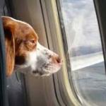 Come prenotare biglietto aereo per cane