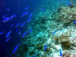 Dove vedere la barriera corallina alle maldive viaggiamo for Comprare pesci online