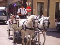 Quanto costa un giro in calesse a Vienna?