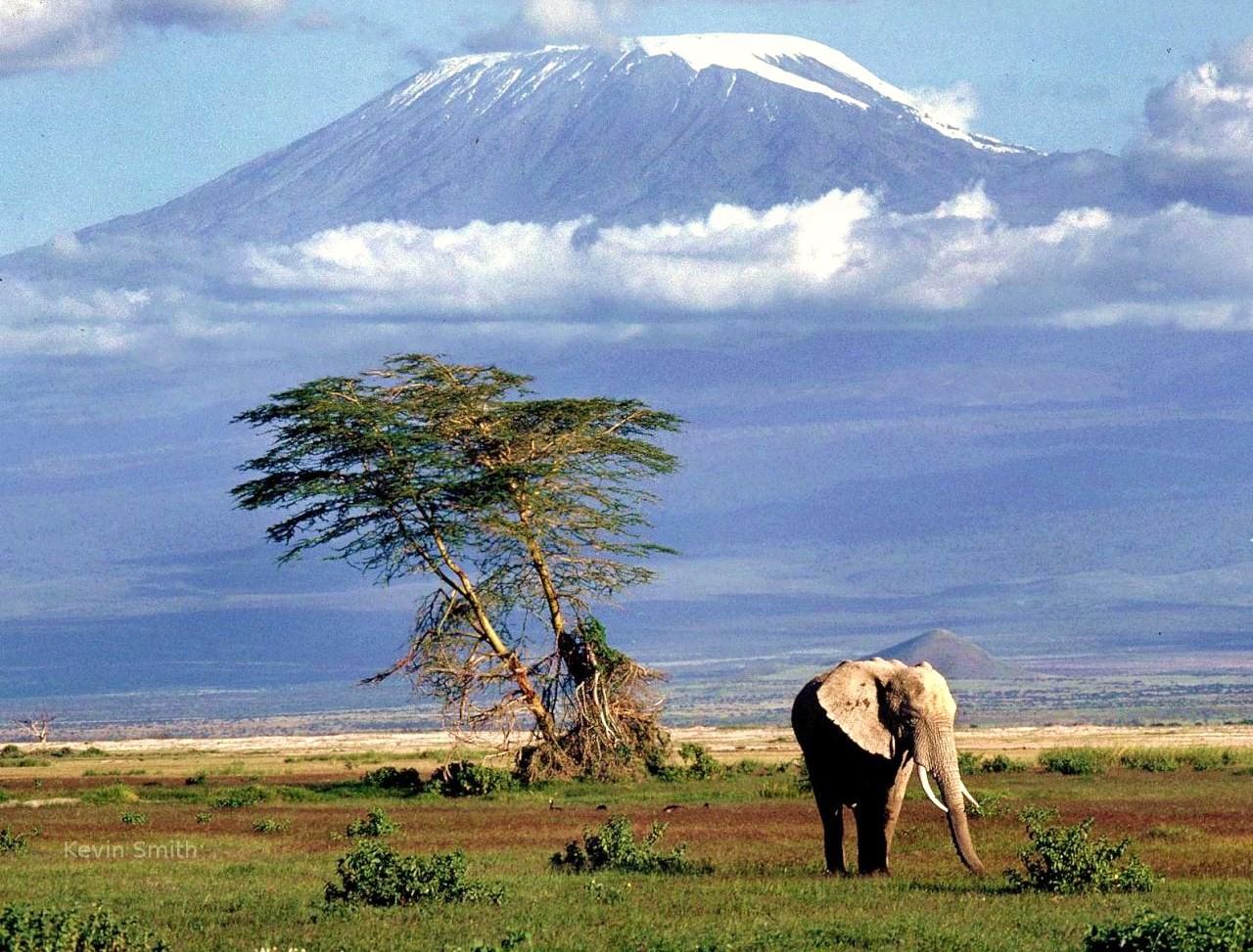 Cosa mettere in valigia per safari