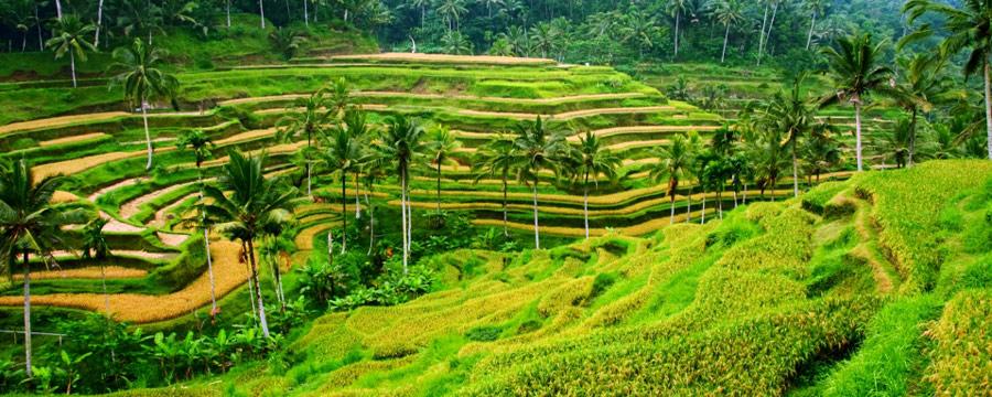 Come preparare la valigia per viaggio a Bali