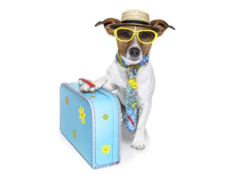9 strategie da adottare per viaggiare durante l'anno