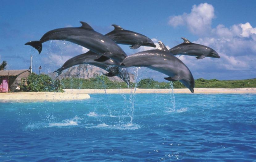 Luoghi dove vedere delfini sulle coste Spagna