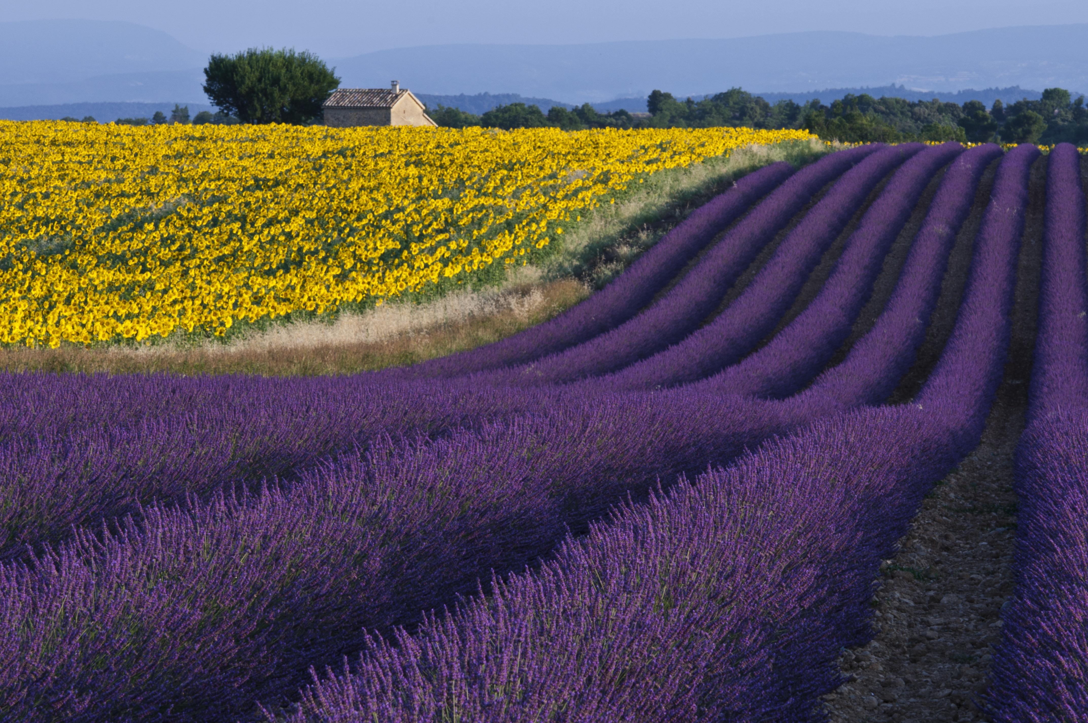 Cinque motivi per visitare la provenza in primavera - La provenza italiana ...