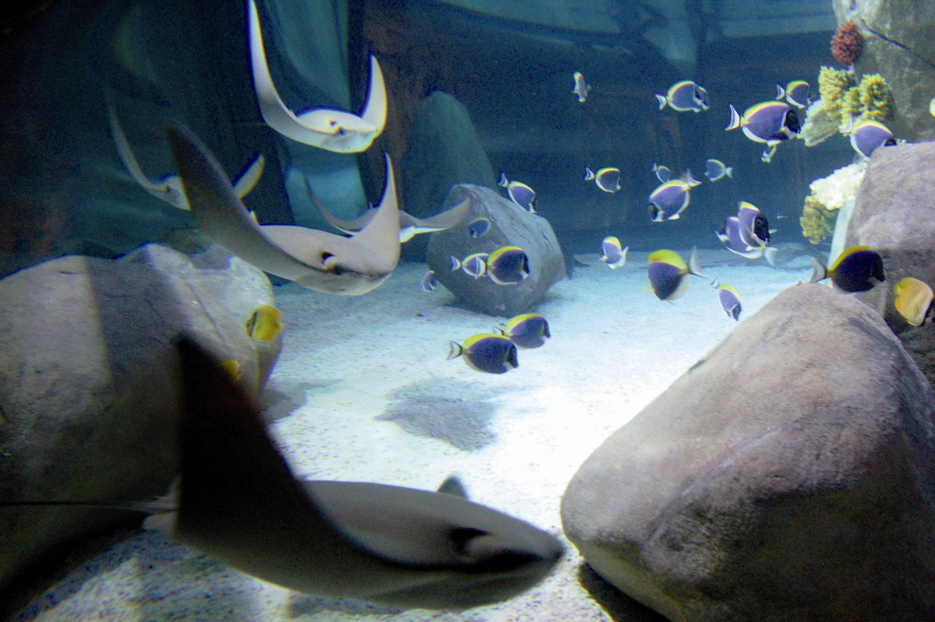 Sea Life 004