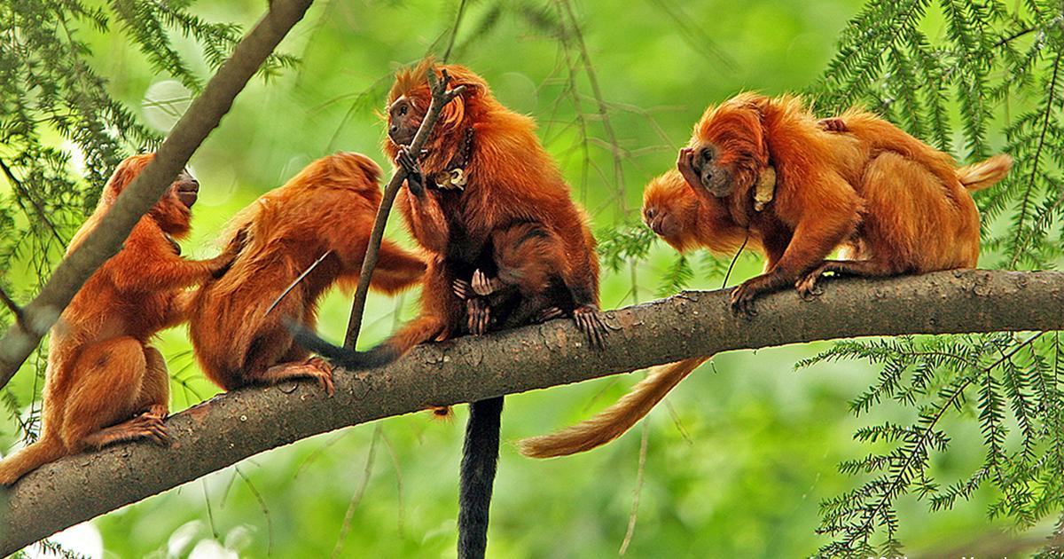 1200x630 305865 francia mistero sulle scimmie rar
