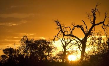 Itinerario luna di miele in Sudafrica