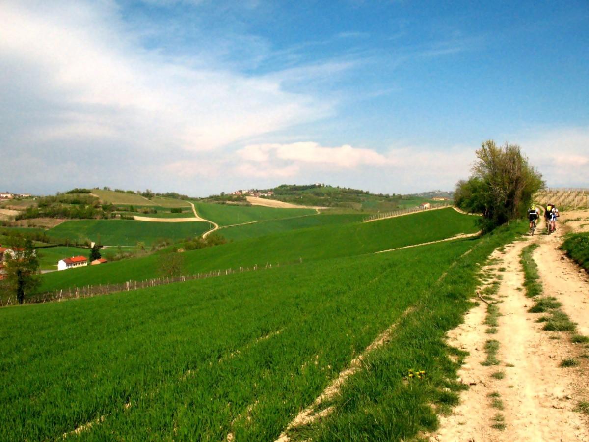 Paesaggio collinare Colline del Monferrato