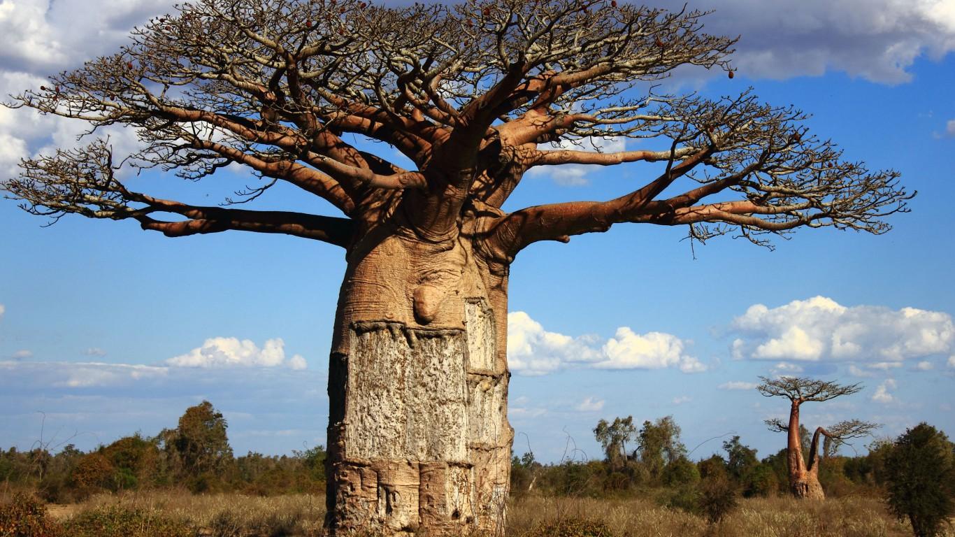 Classifica 10 alberi più strani al mondo