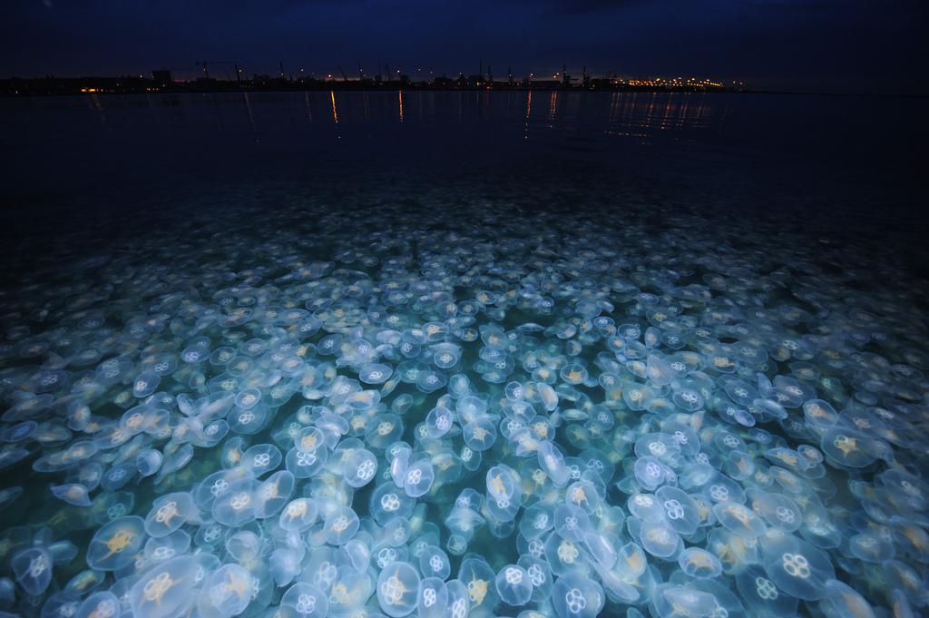 Località con più meduse della Sicilia
