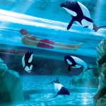 Orl SeaworldAquatica DolphPl