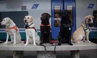 Prezzo trasporto animali domestici in treno