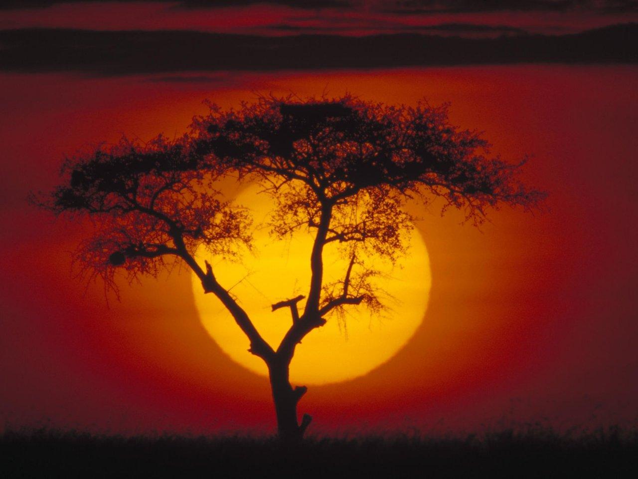 acacia tree kenya 001