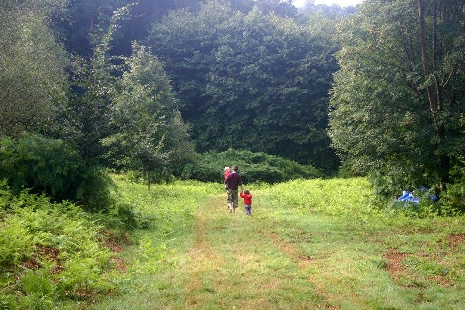 eco camp uk at beech estate woodland campsite south east england east sussex large