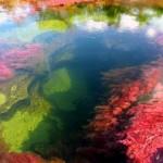 fiume Colombia Cano Cristales