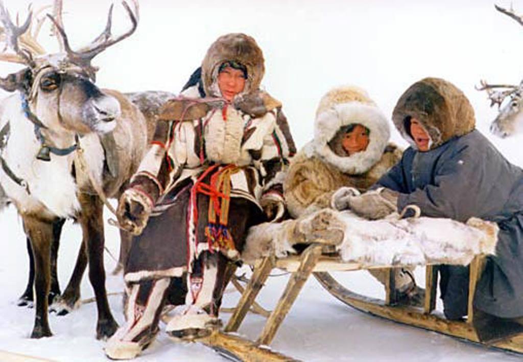 Che cos'è il cibo tradizionale Sami?