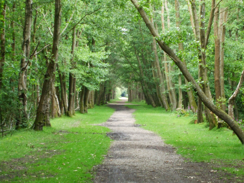 New Forest Track