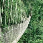 il ponte sospeso del kakum national park